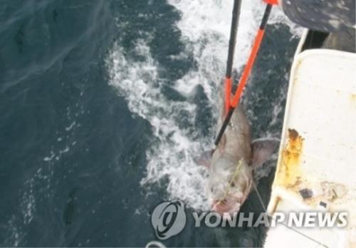 【悲報】米国「韓国は『予備違法漁業国』」 韓国人「日本ガー」「日本ハー」「日本モー」