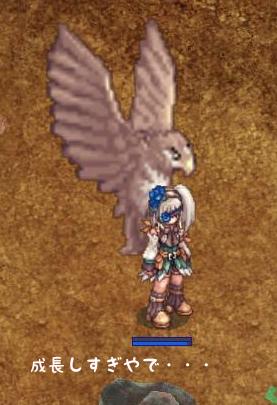 鷹の成長2